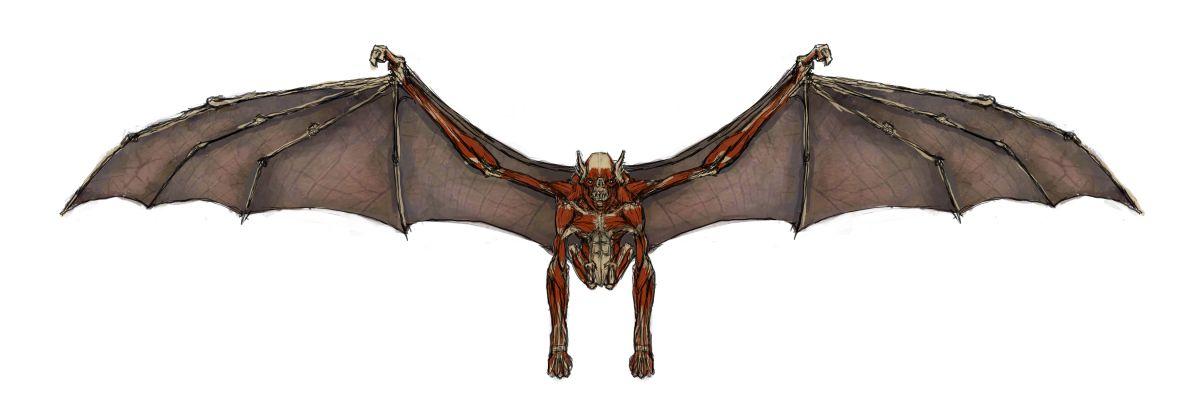 tomb-raider-anniversary-concept-art-68_28883073184_o